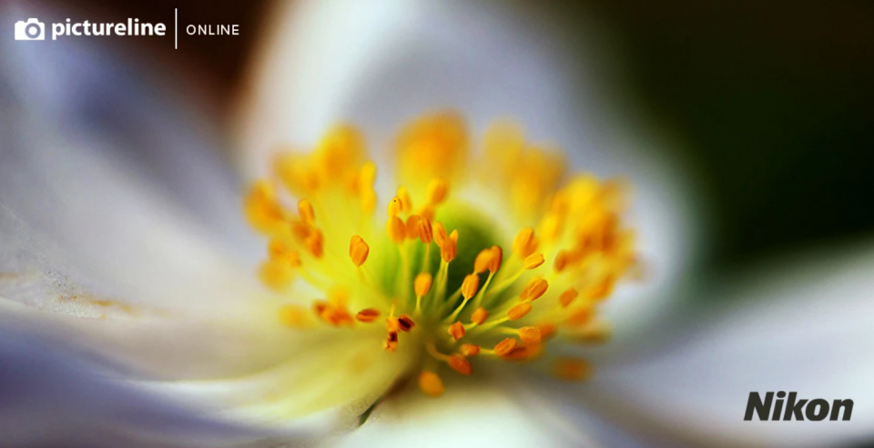 Pictureline Presents Backyard Macro Photography with Tony Krup and Andy Dunaway